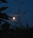 night 177898